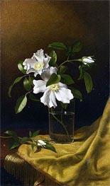 Cherokee Roses in a Glass on Gold Velvet Plush, 1886 by Martin Johnson Heade | Painting Reproduction
