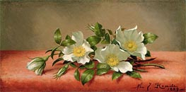 The Cherokee Rose, 1889 by Martin Johnson Heade | Painting Reproduction