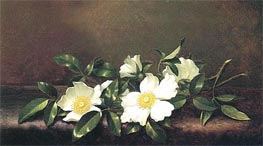 Cherokee Roses on a Purple Velvet Cloth, c.1890 by Martin Johnson Heade | Painting Reproduction