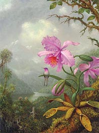 Hummingbird Perched on an Orchid Plat, 1901 by Martin Johnson Heade | Painting Reproduction