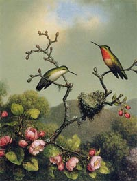 Ruby Throat of North America, 1865 by Martin Johnson Heade | Painting Reproduction