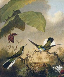 Black-Eared Fairy, c.1864/65 by Martin Johnson Heade | Painting Reproduction