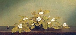 Trailing Arbutus, 1860 by Martin Johnson Heade | Painting Reproduction