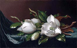 Magnolias on Light Blue Velvet Cloth, c.1885/95 by Martin Johnson Heade | Painting Reproduction