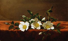 Cherokee Roses, c.1890 by Martin Johnson Heade | Painting Reproduction
