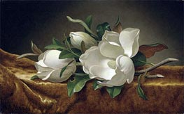 Magnolias on Gold Velvet Cloth | Martin Johnson Heade | Painting Reproduction