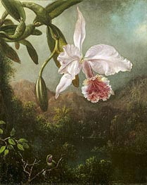Orchid Blossoms, 1873 by Martin Johnson Heade | Painting Reproduction