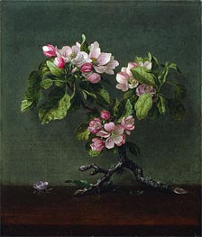 Apple Blossoms, 1873 by Martin Johnson Heade | Painting Reproduction