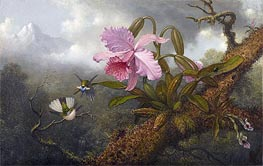 Cattleya Orchid, Two Hummingbirds and a Beetle, c.1875/90 by Martin Johnson Heade | Painting Reproduction