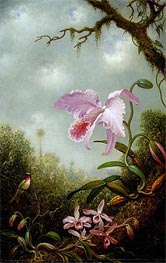 Hummingbird with Cattleya and Dendrobium Orchids, c.1890 by Martin Johnson Heade | Painting Reproduction