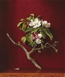 Apple Blossoms in a Corner, 1868 by Martin Johnson Heade | Painting Reproduction