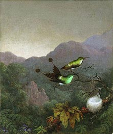 Racket-Tail Brazil, c.1863/65 by Martin Johnson Heade | Painting Reproduction