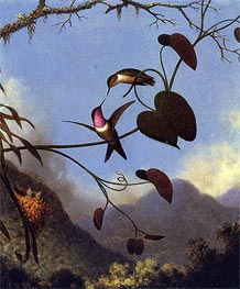 Amethyst Woodstar, c.864/65  by Martin Johnson Heade | Painting Reproduction