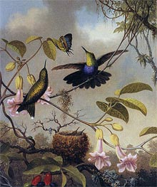 Fort-Tailed Woodnymph, c.1864/65  by Martin Johnson Heade | Painting Reproduction