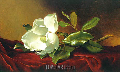 A Magnolia on Red Velvet, c.1885/95 | Martin Johnson Heade | Painting Reproduction