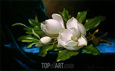 Giant Magnolias on a Blue Velvet Cloth, c.1890 | Martin Johnson Heade | Painting Reproduction