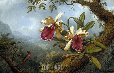 TWO FIGHTING HUMMINGBIRDS WITH ORCHIDS PAINTING BY MARTIN JOHNSON HEADE REPRO