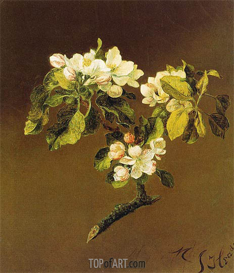 A Spray of Apple Blossoms, 1870 | Martin Johnson Heade | Painting Reproduction