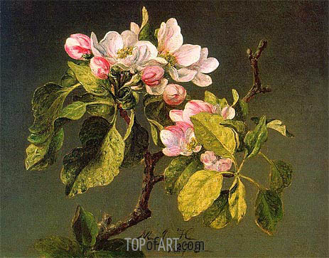 A Branch of Apple Blossoms and Buds, 1878   Martin Johnson Heade   Painting Reproduction