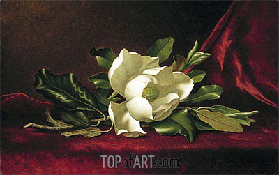 The Magnolia Flower Martin Johnson Heade Painting Reproduction