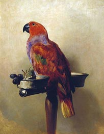 The Lory | Landseer | Painting Reproduction