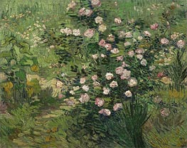 Rosebush in Blossom | Vincent van Gogh | Painting Reproduction