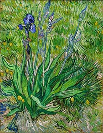 The Iris, 1889 von Vincent van Gogh | Gemälde-Reproduktion