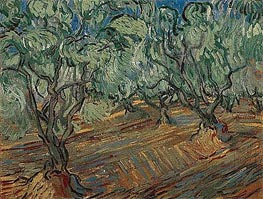 Olive Grove, 1889 by Vincent van Gogh | Painting Reproduction