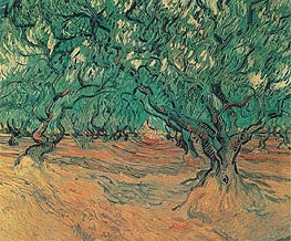 Olive Trees | Vincent van Gogh | Painting Reproduction