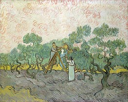Olive Picking, 1889 von Vincent van Gogh | Gemälde-Reproduktion