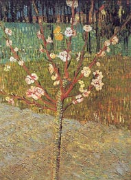 Flowering Almond Tree | Vincent van Gogh | Painting Reproduction
