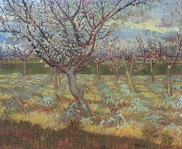Apricot Tress in Blossom, April 1888 by Vincent van Gogh | Painting Reproduction