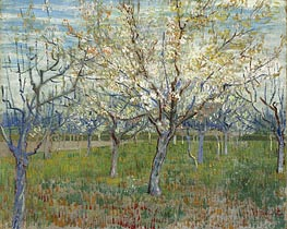 Orchard with Blossoming Apricot Trees, 1888 by Vincent van Gogh | Painting Reproduction