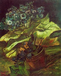 Cineraria in a Flowerpot, July-Augus by Vincent van Gogh | Painting Reproduction