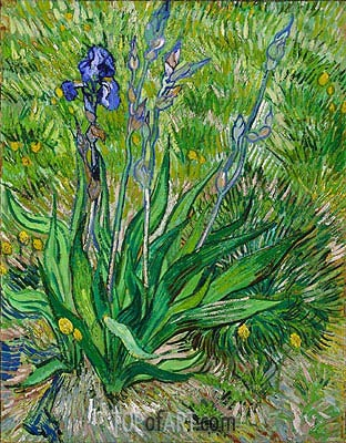 The Iris, 1889 | Vincent van Gogh | Gemälde Reproduktion
