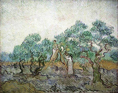 The Olive Orchard, 1889 | Vincent van Gogh | Painting Reproduction