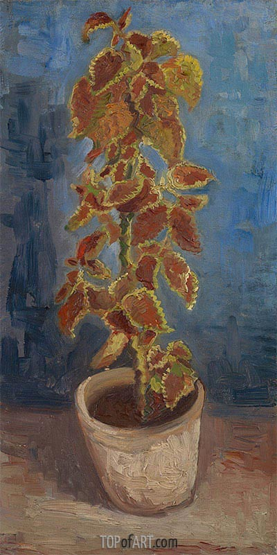Flame Nettle in a Flowerpot, 1886 | Vincent van Gogh | Painting Reproduction