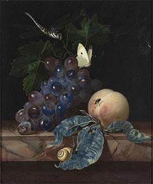 A Still Life with Grapes, Peach, Cabbage-White and Dragon-Fly, 1665 by Willem van Aelst | Painting Reproduction