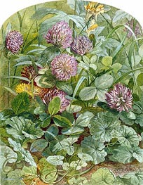 Red Clover with Butter-and-Eggs and Ground Ivy, 1860 by William Trost Richards | Painting Reproduction